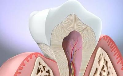 Что такое надкостница - Стоматология «Линия Улыбки»