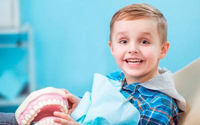 Как устроены детские зубы - Стоматология «Линия Улыбки»